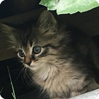 Adopt A Pet :: Lala - Mount Laurel, NJ