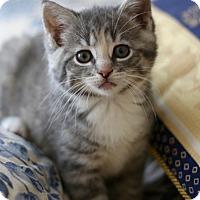 Adopt A Pet :: Josie - Horsham, PA
