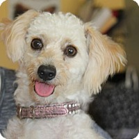 Adopt A Pet :: Alexander - San Diego, CA