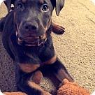 Adopt A Pet :: Bell