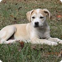 Adopt A Pet :: Kam - West Springfield, MA
