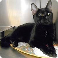 Adopt A Pet :: Vastra - Redding, CA