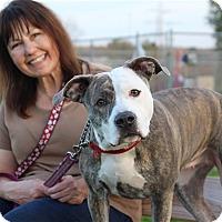 Adopt A Pet :: Dee Dee - Elyria, OH