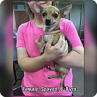 Adopt A Pet :: Camilla - Boerne, TX