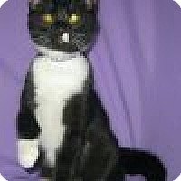 Adopt A Pet :: Rozina - Powell, OH
