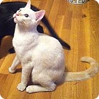 Adopt A Pet :: Phoebe VII - Austin, TX