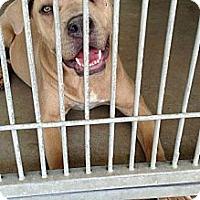 Adopt A Pet :: Jenny URGENT - San Diego, CA