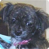 Adopt A Pet :: Chita - Kingwood, TX