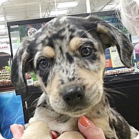 Adopt A Pet :: Ruby B#4M - Orlando, FL