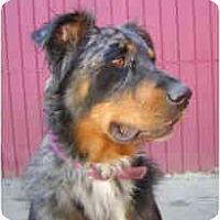 Adopt A Pet :: Zo - Portland, OR