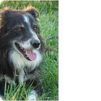 Adopt A Pet :: Shamus - Honaker, VA