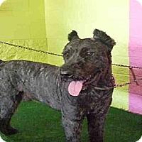 Adopt A Pet :: Dulan - Inglewood, CA