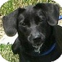 Adopt A Pet :: Abby - Hamilton, ON