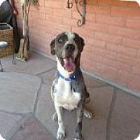 Adopt A Pet :: Titan - Phoenix, AZ