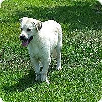 Adopt A Pet :: Jill - Plainfield, IL