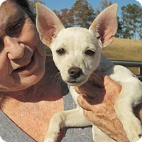 Adopt A Pet :: Jolie - Wilmington, DE
