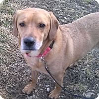 Adopt A Pet :: Rusty - Oberlin, OH