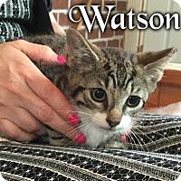 Adopt A Pet :: Watson - River Edge, NJ