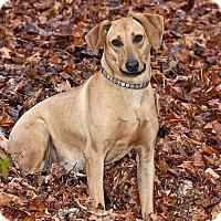 Adopt A Pet :: Lil Ann - Cashiers, NC