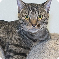 Adopt A Pet :: Reese - Elmwood Park, NJ