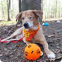 Adopt A Pet :: Milo - Capon Bridge, WV