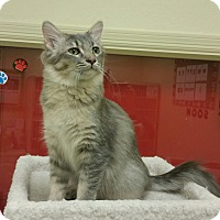 Adopt A Pet :: Angel - Phoenix, AZ