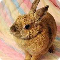 Adopt A Pet :: Pixie - Hillside, NJ