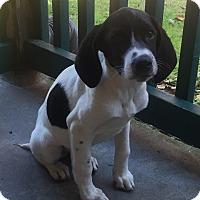 Adopt A Pet :: Daisy - Smyrna, GA