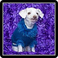 Adopt A Pet :: Gemma - San Diego, CA