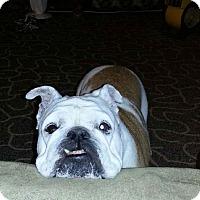 Adopt A Pet :: Juju - Strongsville, OH