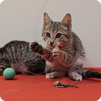 Adopt A Pet :: Victoria - Brooklyn, NY