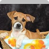 Adopt A Pet :: Sydney - Pittsboro, NC