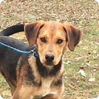Adopt A Pet :: Benson- adorable, happy fellow - Pewaukee, WI