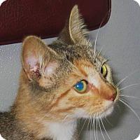 Adopt A Pet :: Kassie - Wharton, TX