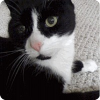 Adopt A Pet :: Oreo_Courtesy Post - Columbia, MD