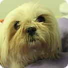Adopt A Pet :: Franchesca