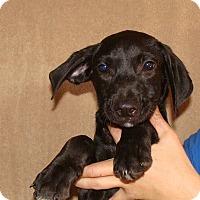 Adopt A Pet :: Viper - Oviedo, FL