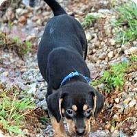 Adopt A Pet :: Black Forest Kake - Atlanta, GA