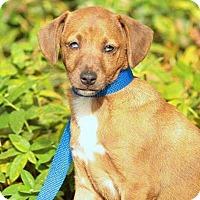Adopt A Pet :: James - Sunnyvale, CA
