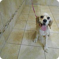 Adopt A Pet :: Piper -Adopted! - Kannapolis, NC
