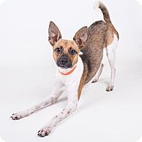 Adopt A Pet :: Tamara - Atlanta, GA