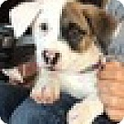 Adopt A Pet :: Baby Panda (aka Libby)