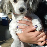 Adopt A Pet :: GRACIE - Corona, CA