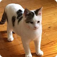 Adopt A Pet :: SkippyJon - Wyoming, MI