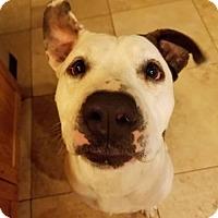 Adopt A Pet :: Kasey - Tucson, AZ