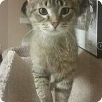Adopt A Pet :: Lionel - Mt. Clemens, MI