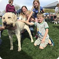 Adopt A Pet :: Allie ADOPTED - Goodyear, AZ