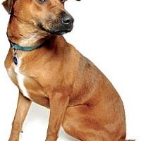 Adopt A Pet :: DINAH - Gloucester, VA