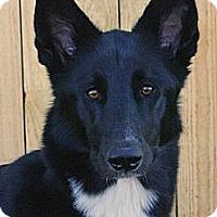 Adopt A Pet :: Millie - Special Needs - Inverness, FL