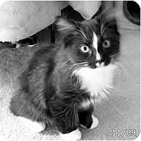 Adopt A Pet :: Pepe` - Brea, CA